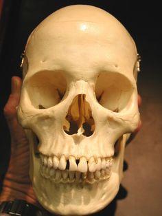 skull_front_PB012149.JPG (768×1024)