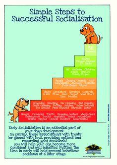 Impulse Related Aggression A Neurological & Behavioural Review - Simply Behaviour Dog Training Courses