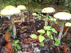 toadstools #botanicals
