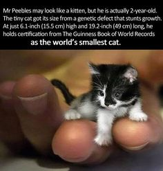 Tiny kitty