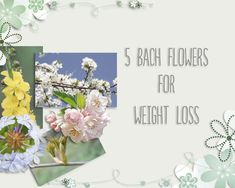 Bach Flowers can help you to achieve and maintain a healthy weight by dealing with any emotional issues that could cause you to overeat and sabotage your weight Bach Flowers, Melt Belly Fat, Healing Herbs, Crochet Patterns For Beginners, To Loose, Medicinal Plants, Homeopathy, Craft Stick Crafts, Flower Cards