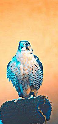 ﺃﺟﻤﻞ خلفيات و صور شاشة هواتف فيفو Vivo خلفيات الشاشة لهواتف فيفو Wallpapers Vivo خلفيات و صور للهاتف فيفو Vivo تنزيل خلفيات فيفو V Wallpaper Animals Bird