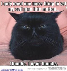 I only need one more thing to set my evil plan in motion...Thumbs. I need thumbs.