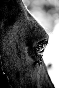 #horse #polishhorse #horseeye #bw #bwphoto #blackandwhitephoto #wild #nature