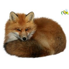 Яндекс.Фотки ❤ liked on Polyvore featuring animals, fox, animaux, backgrounds and filler