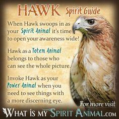 Hawk Spirit Totem Power Animal Symbolism Meaning 1200x1200