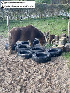 Horse Paddock, Dream Stables, Horse Care, Horse Stuff, Magic Kingdom, Paradise, Barn, Training, Horses