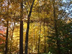 """Still Waters--Notes from a Virginia Shire: """"Falling Leaves"""""""