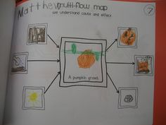 my crazy life in kindergarten: thinking maps