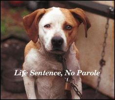 Petition · Pass anti-chaining laws in Alabama! Free dogs from a life of neglect and misery! · Change.org
