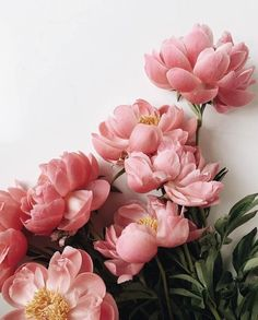 Amazing Flowers, Pink Flowers, Beautiful Flowers, Exotic Flowers, Fresh Flowers, Plant Aesthetic, Flower Aesthetic, Flower Power, Blush Peonies
