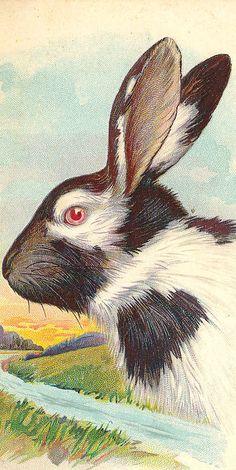 Hmm, Bunny rabbit bust portrait
