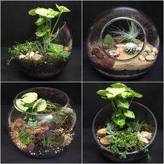 Terrariums, cactus plants, succulents, fishbowl, diy, florist, flowers, plants www.bacchusmarshfloristandnursery.com.au www.facebook.com/bacchusmarshflorist  #bmflorist