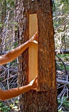 Folded Bark Baskets Tree Bark Crafts Birch Bark Crafts Birch Bark