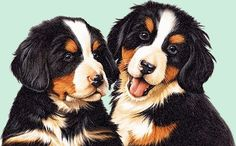 Gifs, Animation, Cute Animal Illustration, Kinds Of Cats, Different Dogs, Animal Pictures, Cute Dogs, Dog Cat, Cute Animals