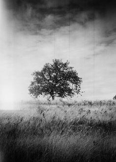 Film Photography Submission by: Ian Tuttle   Pho-Tak Traveler 120, Kodax Tri-X 400 Sierra foothills, Eastern California.