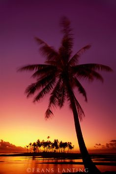 Palm tree at sunset, Bora Bora, Tahiti (via 010424-01 | Frans Lanting Stock)