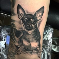 Tattoos, Animals, Medellin Colombia, Tatuajes, Animales, Animaux, Tattoo, Animal, Animais