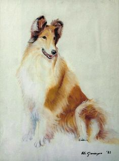 Lovely Collie art.