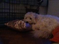 Harvey's pillow