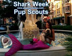 #Pupscouts - Pup Scouts