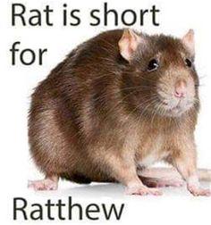 Ratthew is my boi ya kno