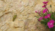 Lo Spaccatello crea l'habitat naturale per per ogni essere vivente. Per il tuo giardino affidati a noi. Professionalità e passione Made in Italy