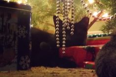 Blackie napping under the tree