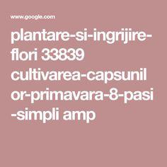 plantare-si-ingrijire-flori 33839 cultivarea-capsunilor-primavara-8-pasi-simpli amp