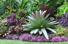 Alcantarea imperialis, Cordyline, Caladium, Croton, Blue ginger, Xanthosoma aurea 'Lime Zinger'. Strobilanthes dyerianus, Neo and dwarf Rhoeo. Hundscheidt Garden.