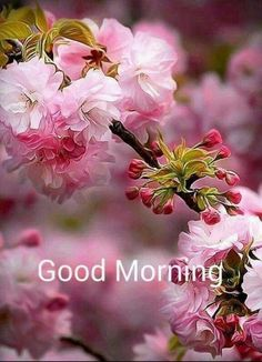 The best Good Morning images collected from all over the web that'll inspire your loved ones & uplift their mood. Good morning images, gifs, wishes, poems, wishes & more! Good Morning Beautiful Flowers, Good Morning Images Flowers, Good Morning Roses, Good Morning Cards, Good Morning Picture, Good Morning Messages, Good Morning Greetings, Morning Pictures, Morning Quotes