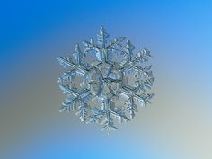 Snowflake picture: Gardener's dream, large stellar dendrite crystal with massive tree-like branches and sectored center on light blue background