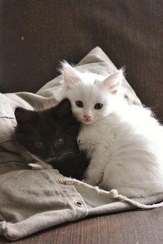 We Heart It の . | Kittens
