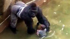 Quand le petit Américain a fait une chute dans l'enclos du gorille Harambe…