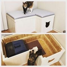 Hiding Cat Litter Box, Diy Litter Box, Hidden Litter Boxes, Litter Box Enclosure, Cool Cat Trees, Diy Cat Tree, Cool Cats, Cat Room, Pet Furniture