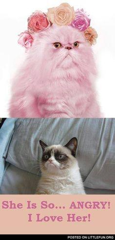 ♡ Grumpy Cat Quotes #GrumpyCat #Meme #Humor