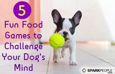 Mental stimulation is just as important for dogs as physical exercise. Here are five fun ways to challenge your dog's mind.
