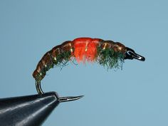 Complete Fisher Forum - Fly Fishing Forum :: View topic - Czech Nymph