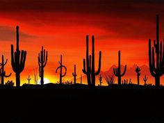 This is the Saguaros at the Sonoran Desert in Arizona. Can't WAIT to take some of these photos in Arizona :) Beautiful Sunset, Beautiful Places, Amazing Sunsets, Beautiful Scenery, Desert Sunset, Sonora Desert, Tucson Sunset, Desert Life, Arizona Sunrise