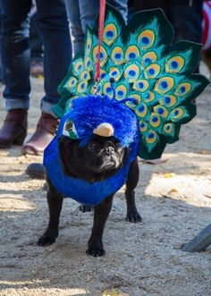 Photos: The Best Dogs in Costume at the Tompkins Square Halloween Dog Parade | Vanity Fair