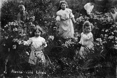 Alaska Wild Lilies photo 94