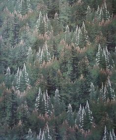 Thomas Kinkade Evergreen Forest Sea Pine by ZoeAnnesEtc on Etsy