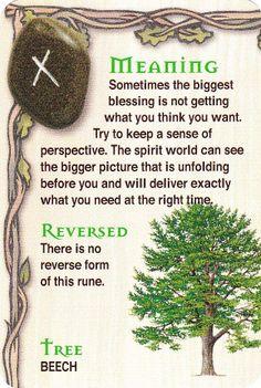 The Rune  - Beech tree