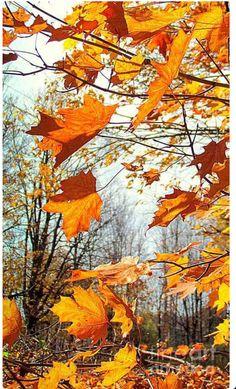 CGI Autumn