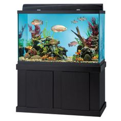 Aquarium stand, 120 gallon aquarium and Aquarium on Pinterest