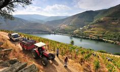 Portugal's Douro region is famous for its port, but also produces fine, good-value reds and top nosh. Perfect, then, for thirsty foodies like our writer