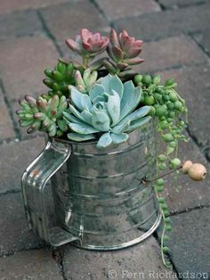 vintage sifter planter...mom if you see the sifter go missing you'll know why.... :)