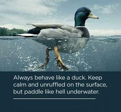 Always behave like a duck. Keep calm and unruffled on the surface, but paddle like hell underwater. #quote @quotlr