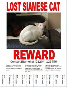 lost cat poster example