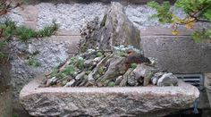 Scottish Rock Garden Club rock terrace with sedums and saxifrage plants